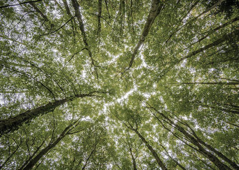 Porcelánicos HDC macht einen schritt vorran fur erneuerbare energien